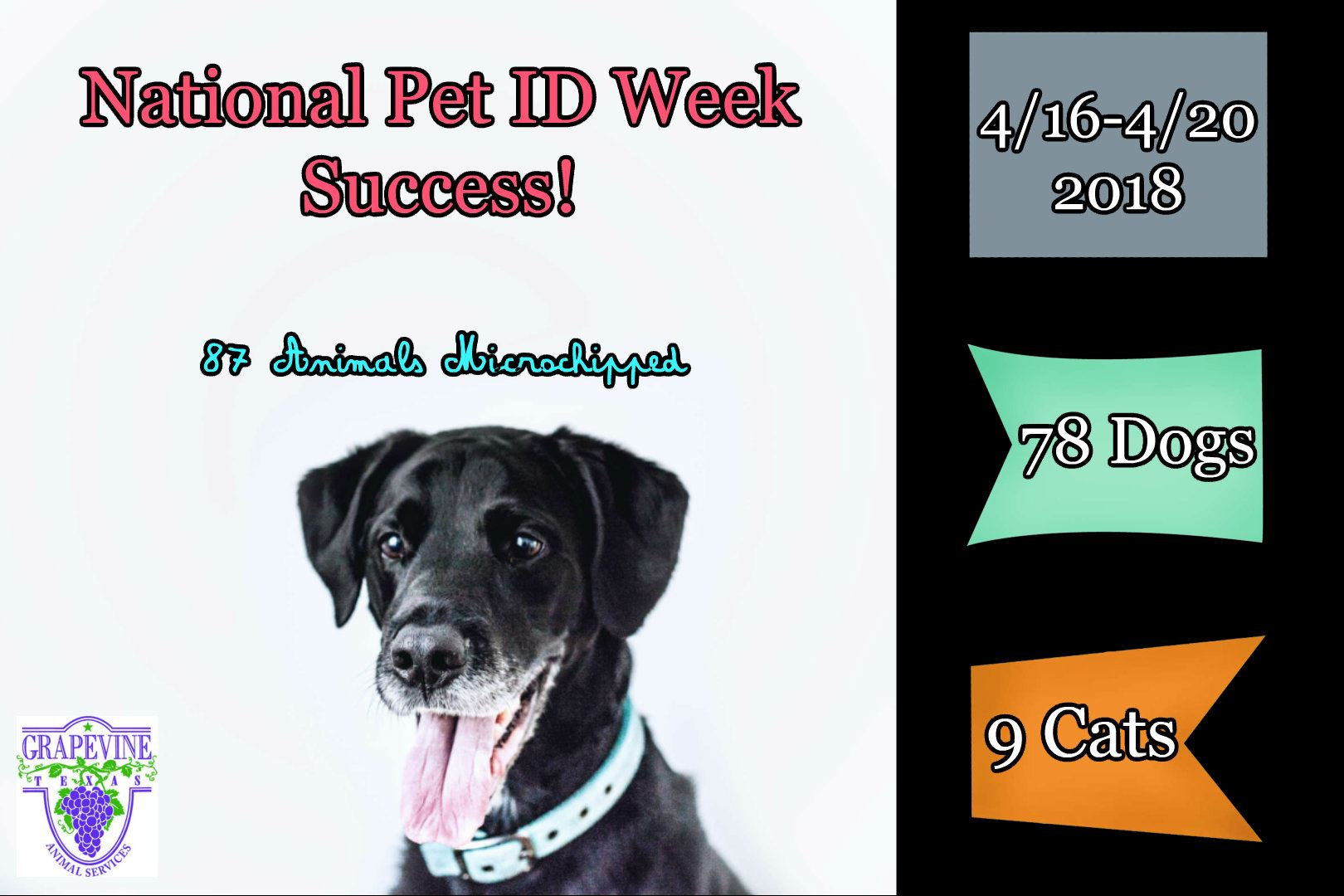 Statistics of pet ID microchipping event.  Listed in text.